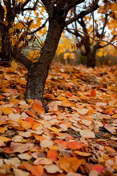 """Autumn flings her fiery cloak over the sumac, beech and oak."" ― Susan Lendroth"