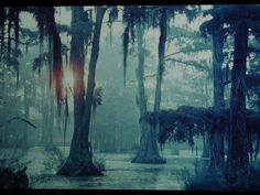 Bayou | classic image of the bayouImage from the Acadia Cultural Center ...