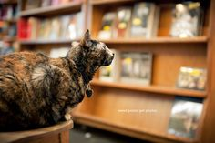 Franny the Skylight Books bookstore cat in Los Angeles