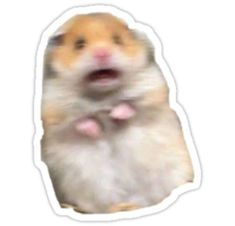 'Hamster Staring Meme' Sticker by Solimar Santoyo in 2021 ...