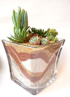Desert Commotion Succulent Plants in Flared Vase by 2CraftyCougs