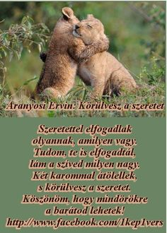 • ARANYOSI ERVIN VERSEI Word 2, My Friend, Prayers, Motivation, Quotes, Animals, Dance, Poetry, Quotations