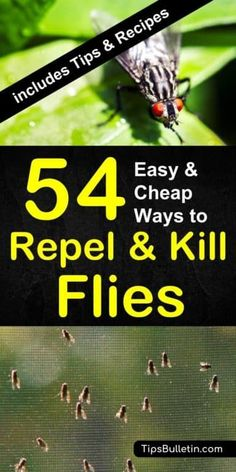 How to Keep Flies Away - 54 Easy and Cheap Ways to Repel and Kill. Find out how to keep flies away in a natural way. With 54 ways to repel and kill houseflies, mosquitoes, and gnats. Includes natural DIY fly repellant recipes and plants that repel flies Keep Flies Away, Get Rid Of Flies, Deep Cleaning Tips, Cleaning Hacks, Cleaning Supplies, Plants That Repel Flies, How To Repel Flies, Flies Outside, Mosquito Spray