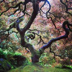 The Japanese garden in #Portland #Oregon is one of the best in America. Photo courtesy of thenearandfar on Instagram.