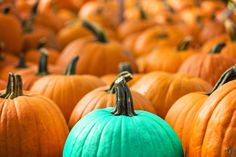 Have you heard of the Teal Pumpkin Project?  Learn about how it helps trick-or-treaters with food allergies: http://www.foodallergy.org/teal-pumpkin-project  #TealPumpkinProject