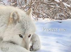 Protect Me.