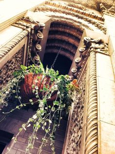 the hanging pLants @ the Yerkes Observatory