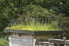 Riefa green roof on shed, South Lakes, Cumbria