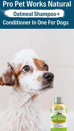 Diy Shampoo, Shampoo And Conditioner, Oatmeal Shampoo, Dog Health Care, Beagle Puppy, Dog Memes, Vitamin E, Aloe, Cute Dogs
