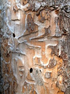 I wonder? how did this path get in the bark? Tree Bark