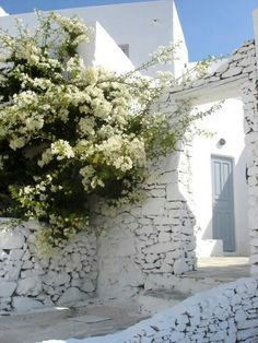 White flowers on the white walls, Serifos, Greece. For luxury hotels in Greece visit http://www.mediteranique.com/hotels-greece/