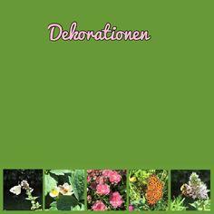 Bullet Journal, Diy Papier, Collagen, Homeschooling, Zucchini, Dessert, Photos, Bumble Bees, Natural Garden