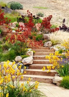 Dozens of Water-Wise Plants That Go Way Beyond Succulents - Sunset Velvety kangaroo paws (Anigozanthos 'Orange Cross' and Bush Gems series) add spicy color against golden grasses in a garden in Tiburon, California, designed by Arterra Landscape Architects Australian Garden Design, Australian Native Garden, Australian Native Flowers, Drought Resistant Plants, Drought Tolerant Landscape, Drought Resistant Landscaping, Landscaping Plants, Front Yard Landscaping, Landscaping Ideas