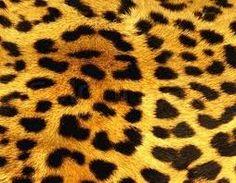 yellow panter print - Google zoeken