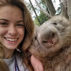 This is a Wombat.. I want one. #wombatselfie #wantone #bestselfieever!!!