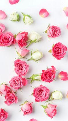 Iphone Spring Wallpaper, Iphone Homescreen Wallpaper, Apple Wallpaper, Flower Wallpaper, Beautiful Rose Flowers, Light Pink Flowers, Beautiful Flowers Wallpapers, Pretty Wallpapers, Flower Background Wallpaper