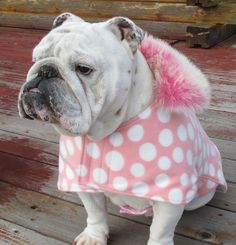 English Bulldog Reversible Coat Polar Pink with Faux FUR COLLAR