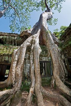 Ta Phrom, Cambodia. Ive been here and want to see again- an amazing place.