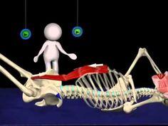 Una interesante animación donde puedes ver el trabajo del Transverso abdominal e iliopsoas o psoas-ilíaco, músculos que trabajaremos este sábado 30 en las clases intensivas de Fortalecimiento abdominal. Entenderemos de manera amena como funcionan los músculos profundos de nuestro cinturón abdominal. Te esperamos el sábado 27 de Febrero.  Telfs. 981 257 564 / 699 013 275  Escríbenos por privado para más información o a nuestro correo info@pilatesriazor.com