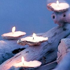 Decorating with seashell candles. Moth, Insects, Bugs