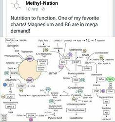 Methylation Chart