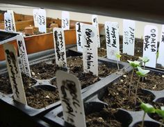 Seed Starting Basics: WHY & HOW to Start seeds, plus how to CARE for & PLANT your seedlings - An Oregon Cottage