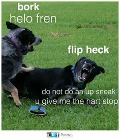 i love dog memes so so much? Funny Animal Memes, Dog Memes, Funny Animal Pictures, Cute Funny Animals, Funny Cute, Funny Dogs, Cute Dogs, Funny Memes, Animal Humor