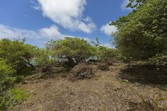 Join an inspiring project helping with conservation volunteering in the Galapagos. Spend 1 - 3 weeks preserving fauna and flora on a stunning island. Galapagos Islands, Gap Year, Volunteers, Conservation, Flora, Country Roads, Time Out, Plants, Sabbatical Leave