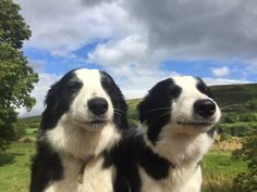 """pagewoman: """" Sheepdogs enjoying the sunshine by James Rebanks """" summer memories Cute Creatures, Beautiful Creatures, Animals Beautiful, Pretty Animals, Animals And Pets, Baby Animals, Funny Animals, Cute Puppies, Cute Dogs"""