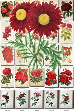 RED-5 FLOWERS Collection of 225 vintage images pictures High resolution digital download printable group 300 dpi florid ruddy set color           data-share-from=listing        >           <span class=etsy-icon