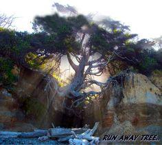 Runaway Tree....