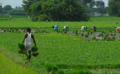 Agriculture, allied sector gets Rs 58,663 cr in budget
