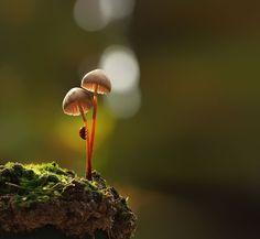 Magical World of Mushrooms Macro Photography by Vyacheslav Mishchenko. Ukrainian photographer Vyacheslav Mishchenko (previously: Tale of Nature: Magical William S Burroughs, Photographie Macro Nature, Fotografia Macro, Mushroom Fungi, Beautiful Forest, Small World, Belle Photo, Nature Photography, Image Photography