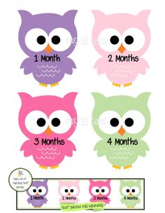 IRON-ONS - DECALS - 12 Monthly iron on heat transfer - for Baby girl - Owls - multiple colors