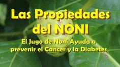 Las Propiedades del NONI, El Jugo de Noni Ayuda a prevenir el Cancer y la Diabetes. Que es el NONI: El noni es el nombre como se le conoce a la fruta Morinda...