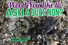Wood You Like to Ash a Question? Tips on using wood ash in the flower and veggie garden - Tips from Golden Plains Greenhouses (Kleefeld, Manitoba) Rose Bush, Plant Growth, Budget Meals, Wood Ash, Food Hacks, Shrubs, Gardening Tips, Greenhouses, Backyard