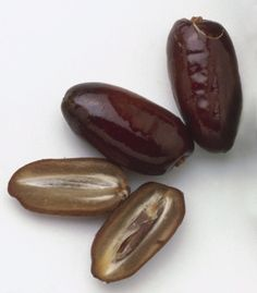We are one of the only makers of Date Juice in Dubai
