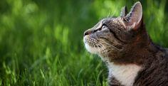 Cat Clinic of Beach Park | TAMPA, FL 33609 veterinary, feline vet, tampa, fl  (813) 289-3925