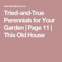 Tried-and-True Perennials for Your Garden | Page 11 | This Old House