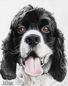 Custom pet drawing with pencil. Pet portrait. Dog portrait. Pencil portrait. Cocker Spaniel drawing. Pet memorial.