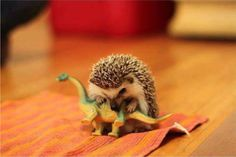 A hedgehog and his dinosaur...  <3