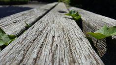 Spaziergang mit meiner Kamera - Unterwegs in der Natur
