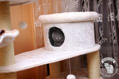 Encinstorf Hello Gitti STARFALL *LT | Britų British shorthair cattery | http://starfall.lt/cats/gitti/ |