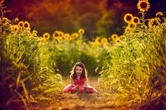 Sussex County Sunflower Maze - Hudson Valley NY Photographer (14)