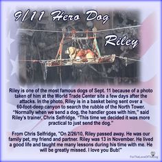 Riley 9/11 Dog Hero