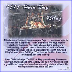 Riley 9/11 Dog Hero