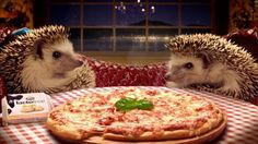 hedgehog pizza party!