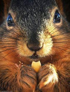 So cute...squirrel close up