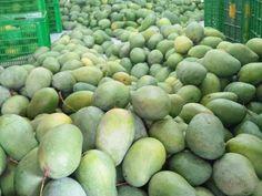Manfaat gizi dari mangga sudah mapan. Ini adalah sumber serat, vitamin A, C, E dan B6 yang sangat baik, serta mineral kalium dan tembaga.Mangga juga mengandung Honeydew, Mineral, Avocado, Fruit, Friends, Food, Amigos, Meal, Honeydew Melon