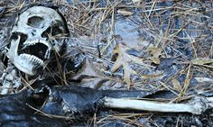 A rotting human corpse is the cornerstone of a complex ecosystem, a better understanding of which could have direct applications in forensic science